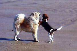 Quibou mit Freund am Strand
