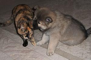 Hund und Katze - kein Problem